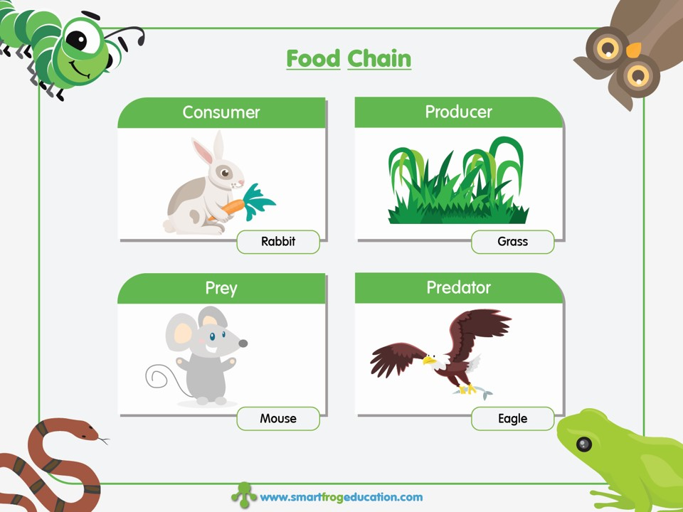 what is the relationship between nutrient content and beef grades