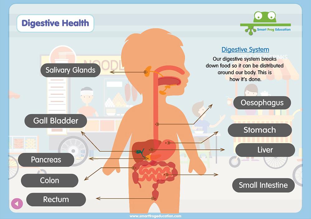 Digestive System Smart Frog