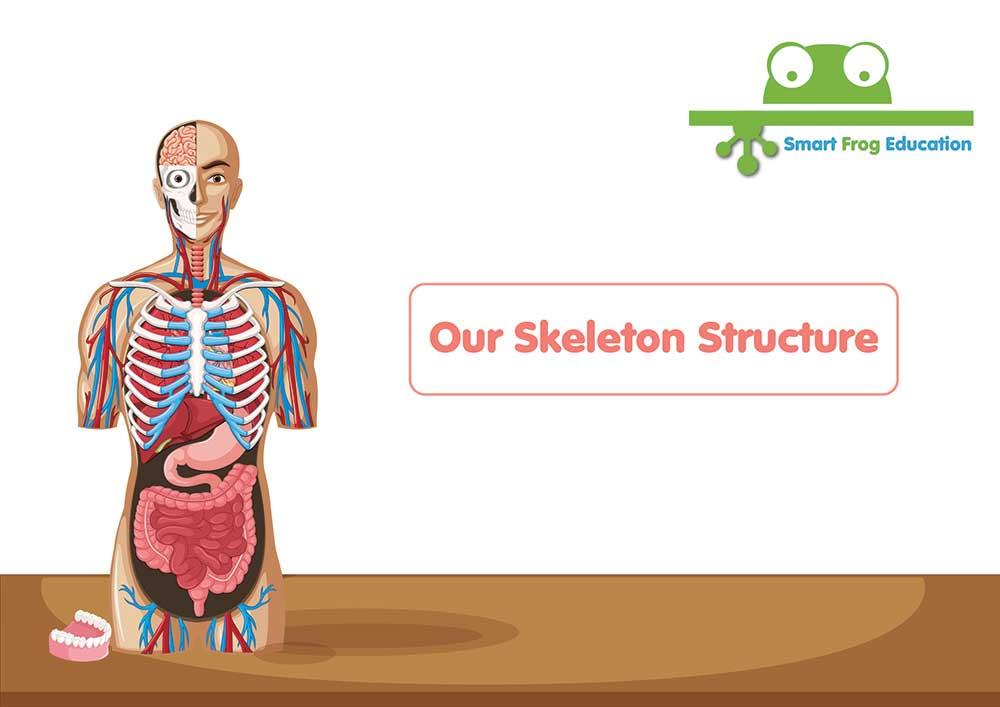 Our Skeletal System Smart Frog