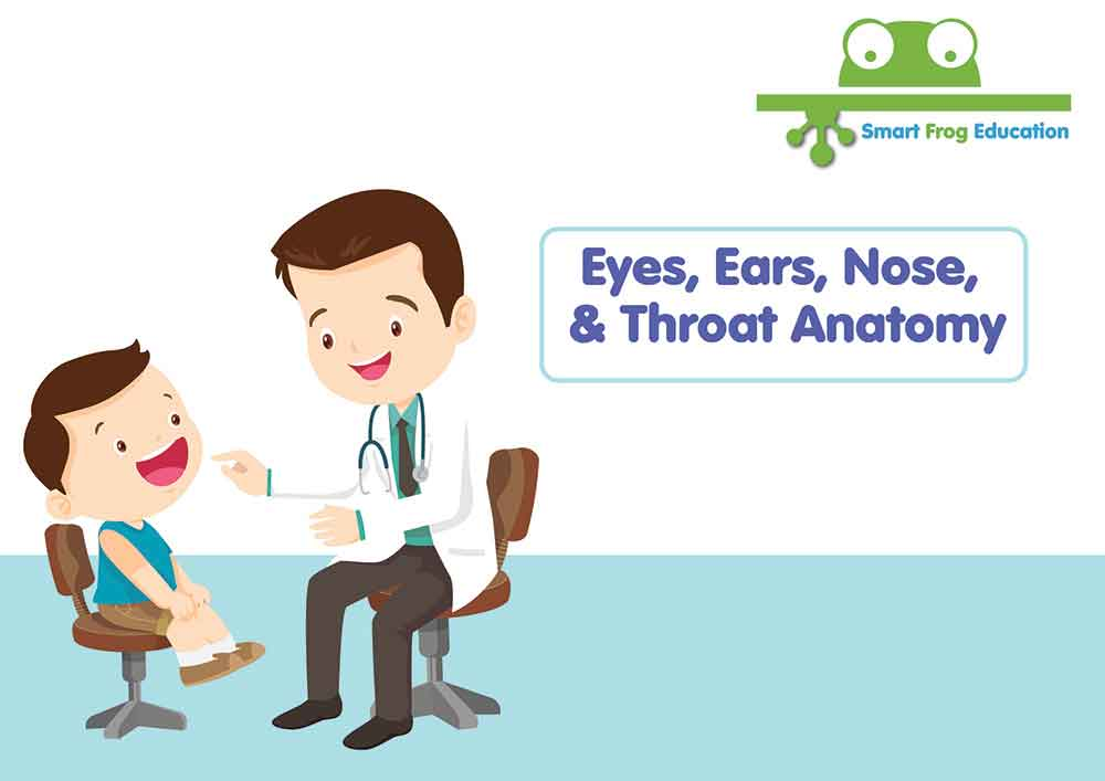 Eyes, Ears, Nose and Throat | Smart Frog