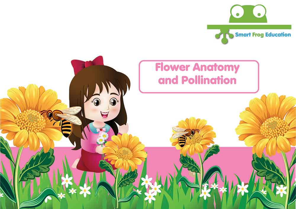 Flower Anatomy and Pollination | Smart Frog
