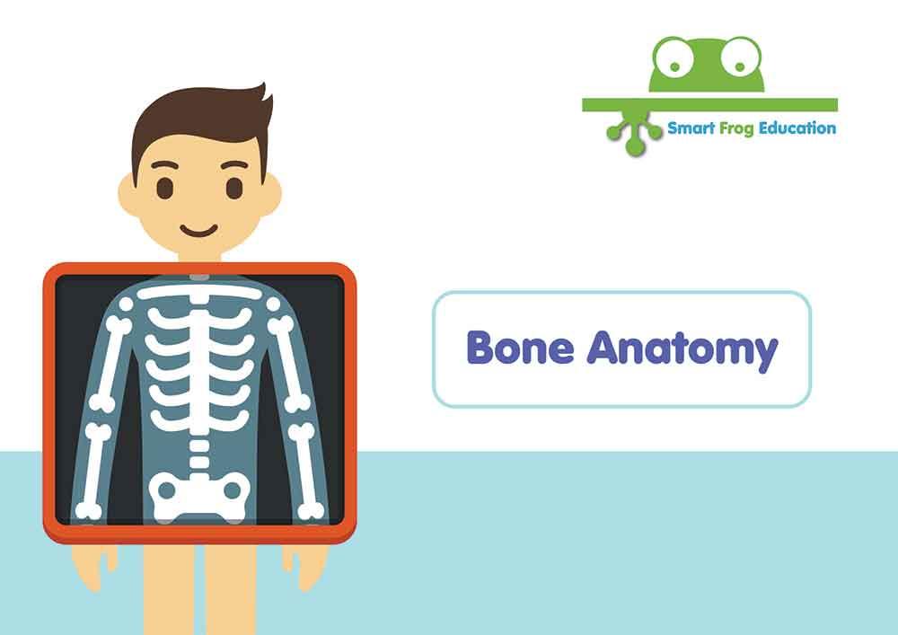 Bone Anatomy Smart Frog