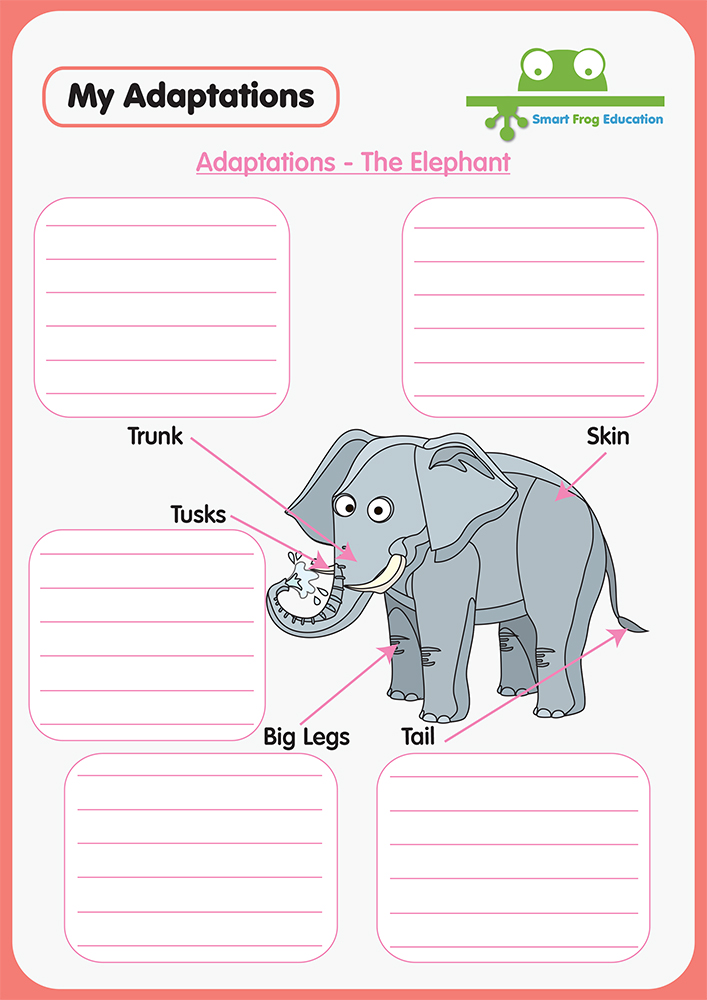 Animal Adaptations The Elephant Smart Frog