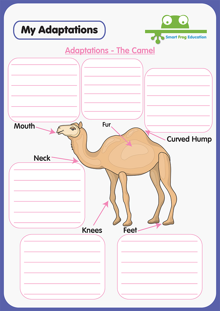 Animal Adaptations The Camel Smart Frog