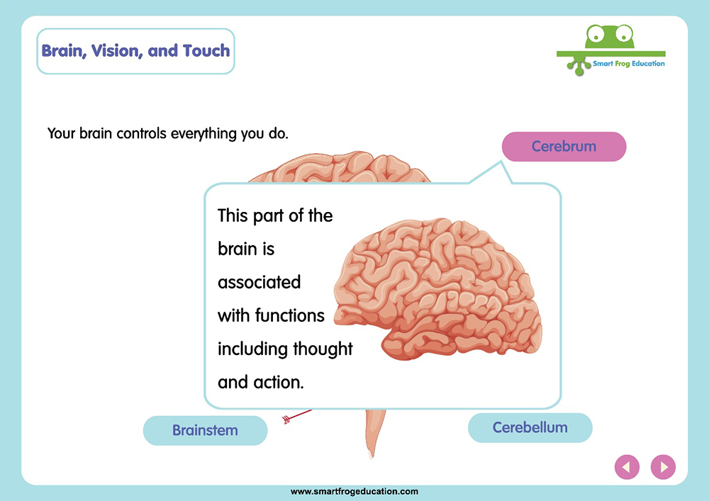 Brain, Vision and Touch | Smart Frog